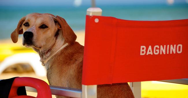 Vacanze con il cane a Rimini